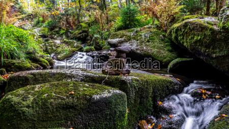 bavarian forest bavaria germany
