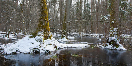 winter landscape of first snow in