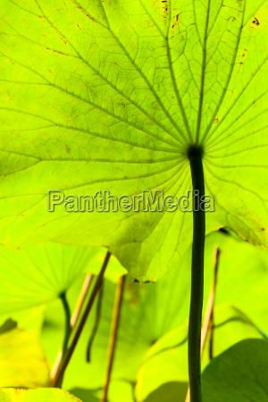 back side of green big leaf