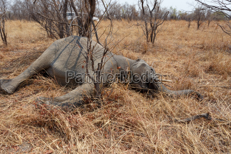 small dead elephant in national park