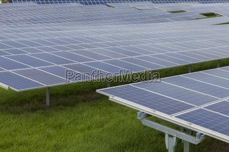 meadow solar cells in a solar