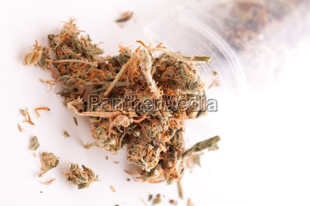 cannabis marijuana flowers in small bags