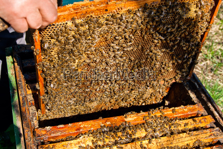 bees works on honeycomb
