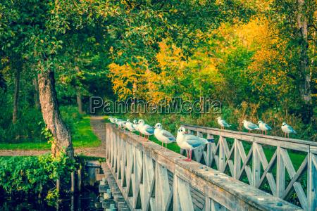 belo agradavel folha passeio viajar ambiente