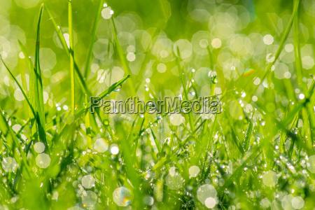dew in the sunshine