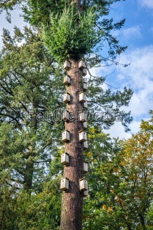 bird nests in a tall tree