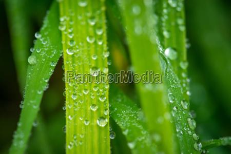 grass after the rain