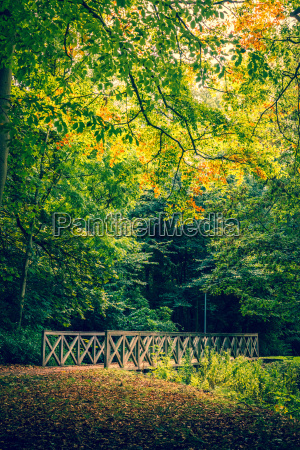 autumn scenery with a bridge