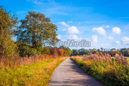 colorful trees by a trail