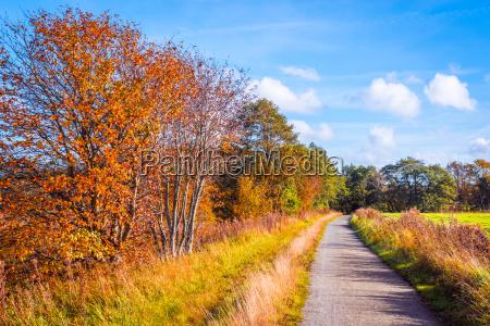 trail going through a autumn scenery