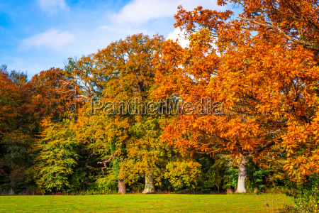 trees in autumn colors in a