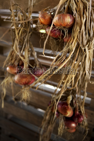 onions hanged in a storeroom