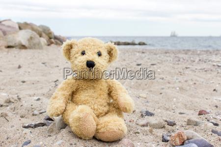 a, teddy, bear, sits, on, the - 15215561