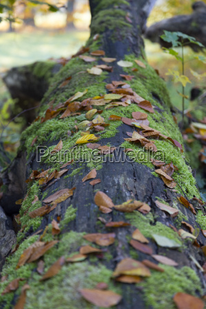 tree trunk with moss and leaves