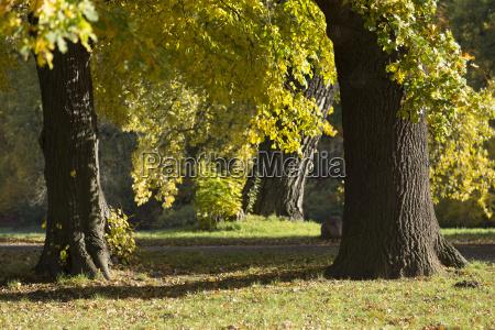 tree trunks in the sun