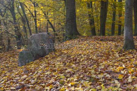 boulder in forest