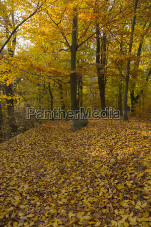 forest road in autumn leaves