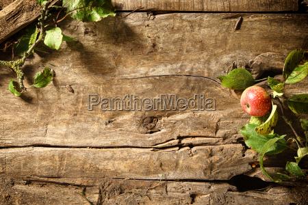 autumn apple on a rustic wood