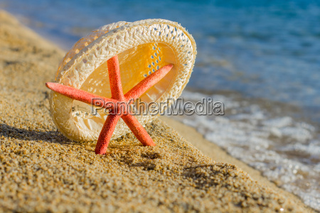 summer holiday travel starfish