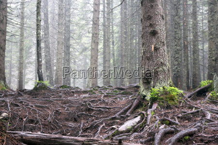 forest tree roots