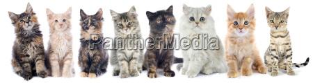 group of kitten