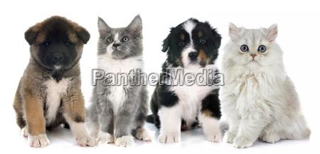 puppies and kitten