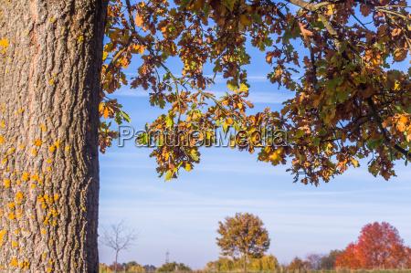 colorful autumn oak