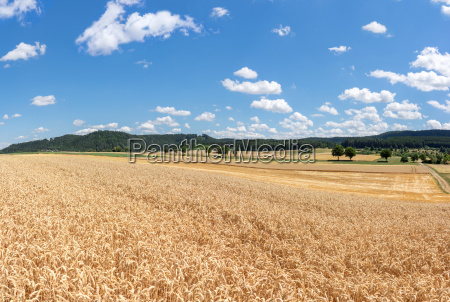 view over a field with ripe