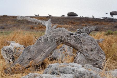 landscape namibia game reserve
