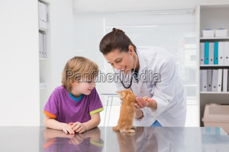 veterinarian examining a cat with its