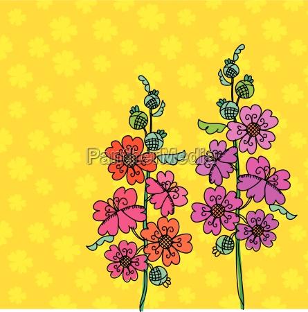 fiore pianta malva