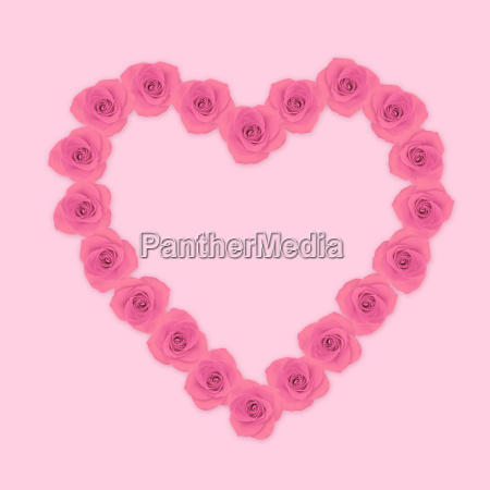 heart shape pink rose flowers on