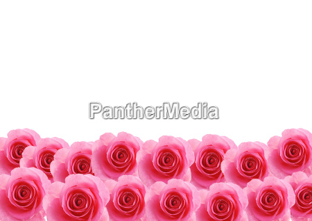 flowers pink rose textured background