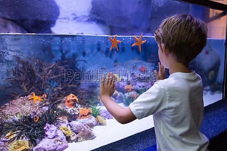 young man touching a starfish tank