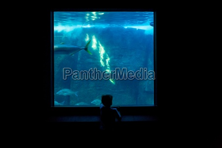 young man watching fish in a