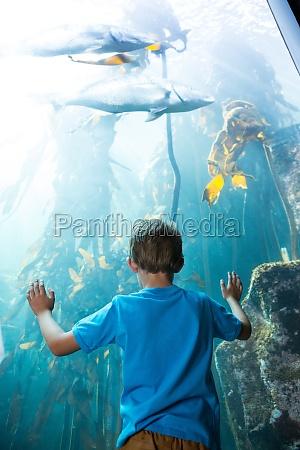 young man touching a illuminate fish