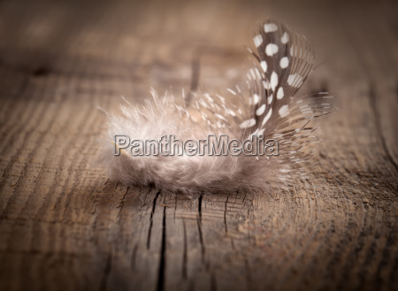 quail feather on wooden base