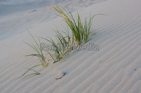 summer beach on denmarks north sea