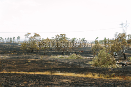 aftermath of the epping bushfires