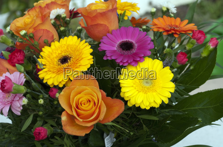 bouquets of flowers strauss colorful