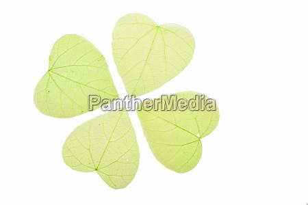 four green heart shaped skeleton leaves