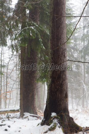 winter view of natural forest with