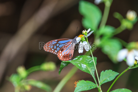beautiful butterfly in forest