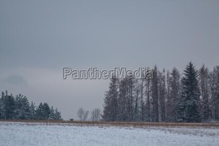 wintery landscape