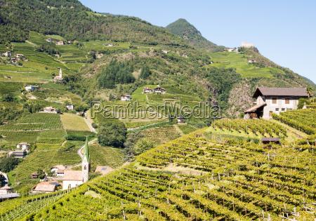 vineayard at bolzano