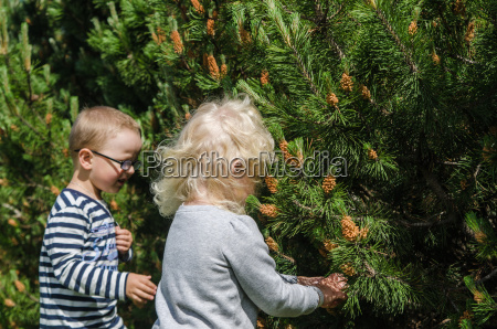 boy, and, girl, collect, pine, buds - 15786414