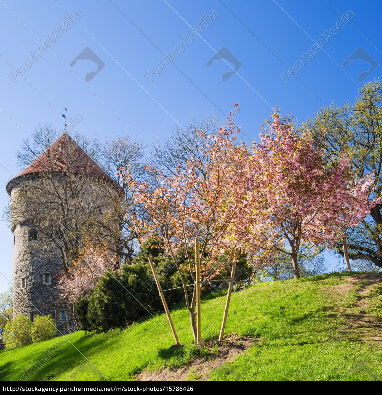 view, of, the, old, tallinn, beautiful - 15786426