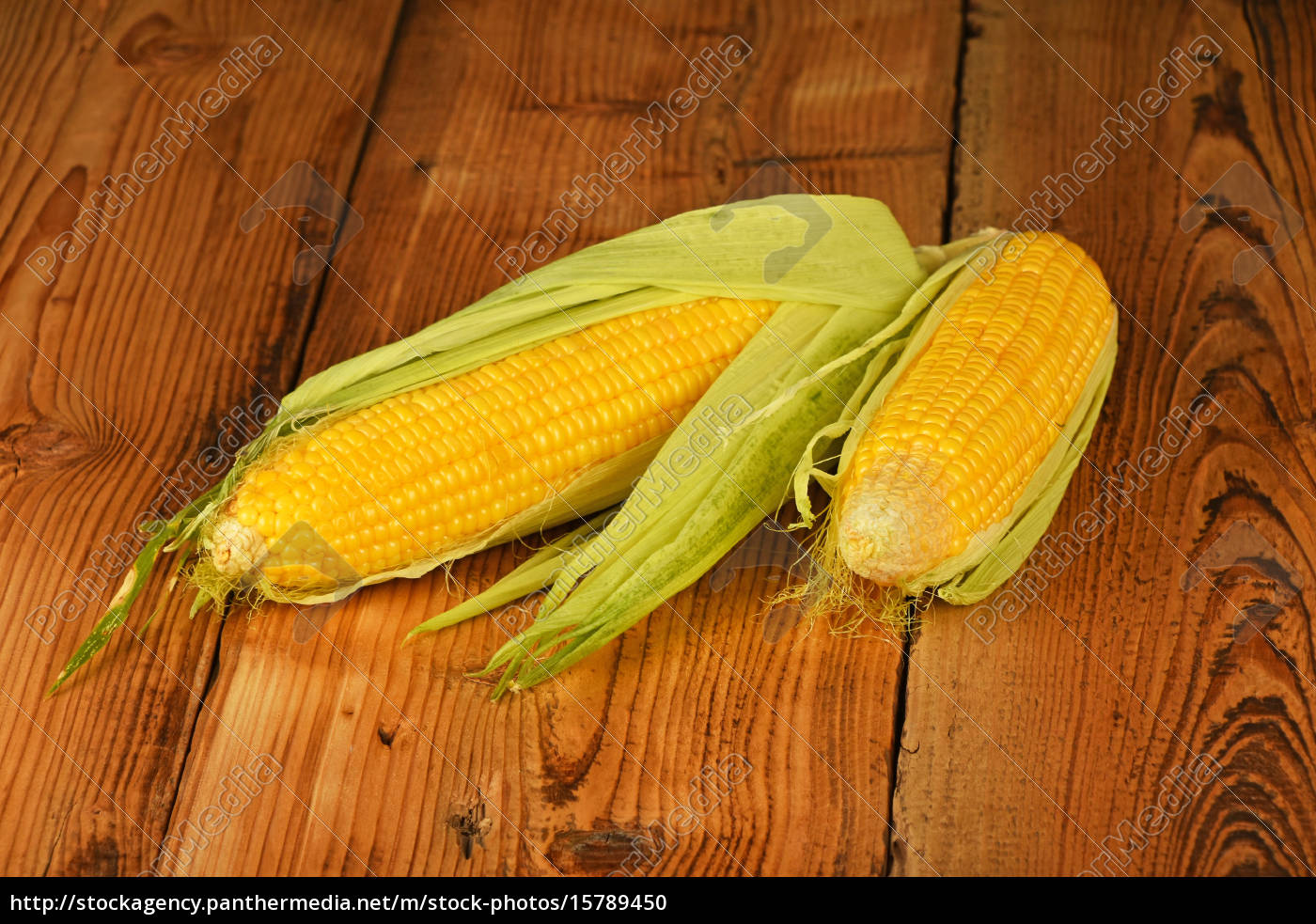 two, open, corn, cob, on, vintage - 15789450