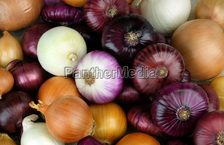 onions of different varieties and colors