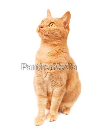 cat, cat, cat, cat - 15794811